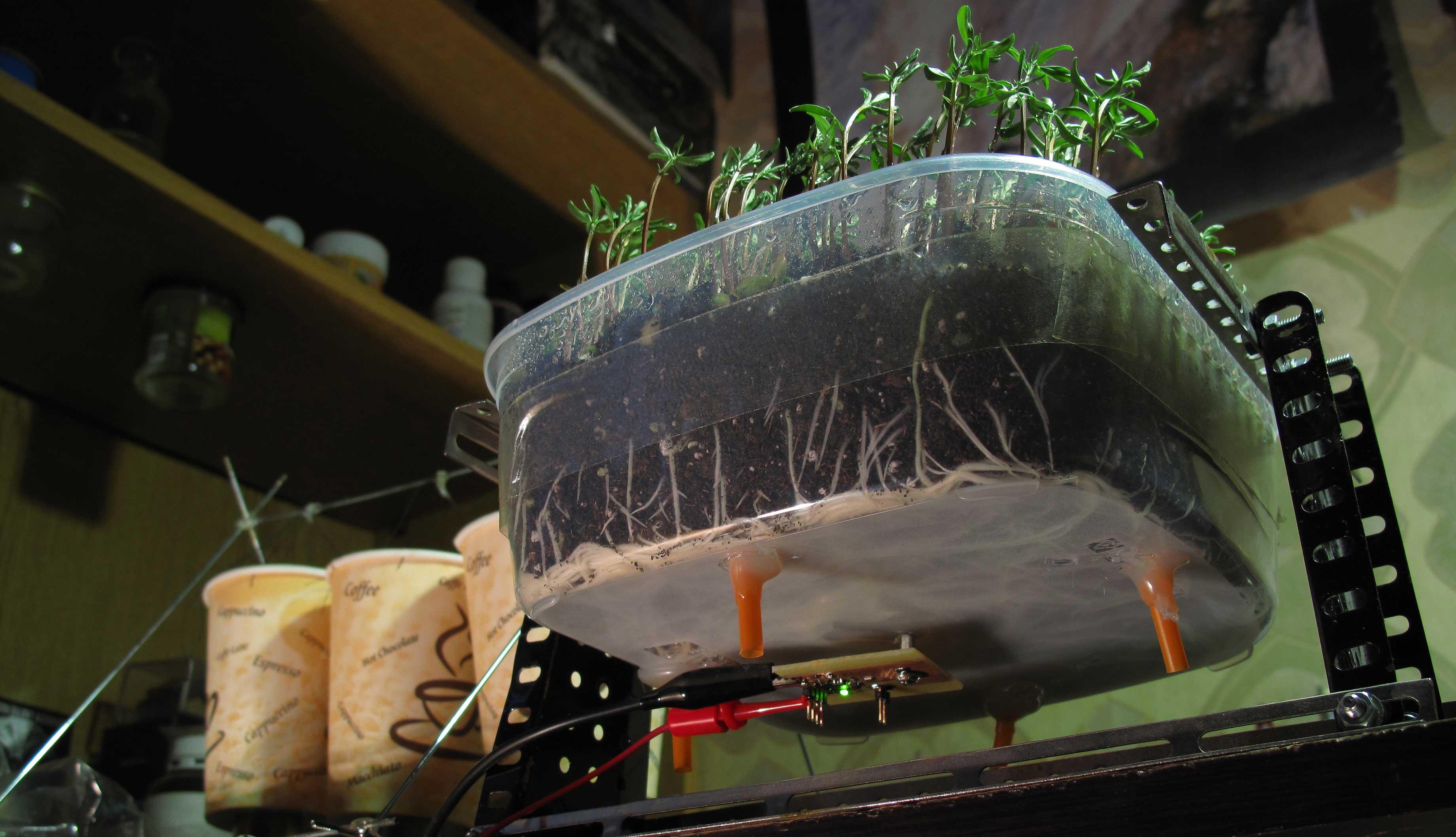 Трева, която мърка, когато я погалиш